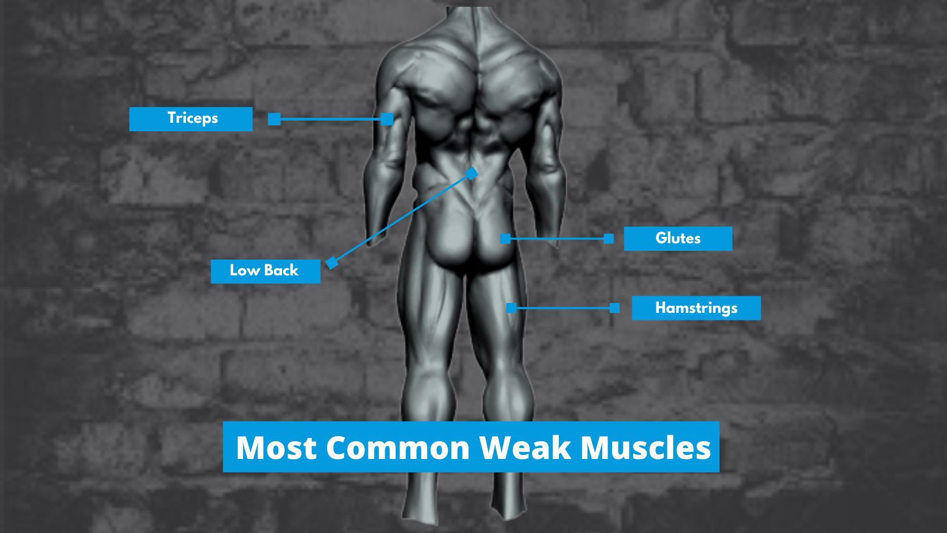 Most Common Weak Muscles Graphic